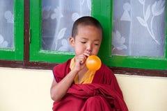 Ung buddistisk munk på den Rumtek kloster, Sikkim, Indien royaltyfri foto