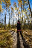 Ung caucasian kvinnlig spring till och med guld- asp- träd på en härlig nedgångdag Fotografering för Bildbyråer