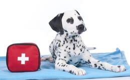 Ung dalmatian bredvid första hjälpensats Arkivfoton