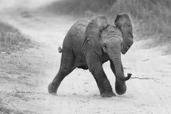 Ung elefantlek på vägen medan familjmatning som är närliggande i konstnärligt Arkivfoton