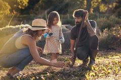 Ung familj som tillsammans arbetar i deras lantgård royaltyfria bilder