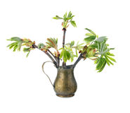 Ung filial av det kastanjebruna trädet för häst Royaltyfria Bilder