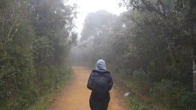 Ung flicka i regnrocken som går på den wood slingan under lopp Fotvandra kvinnan med ryggsäcken som går i tropisk våt skog lager videofilmer