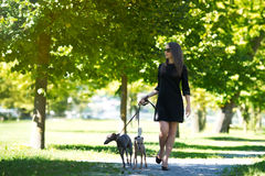 Ung flicka med två vinthundar i parkera Royaltyfria Bilder