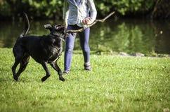 Ung flicka och hund på gräset Fotografering för Bildbyråer