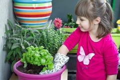 Ung flicka som arbeta i trädgården att le för basilikaväxt royaltyfri fotografi
