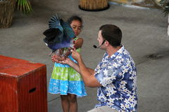 Ung flicka som rymmer den exotiska fågeln under levande show, djungelö, Miami, 2014 Royaltyfria Bilder