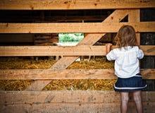 Ung flicka som ser in i djur penna royaltyfria foton
