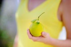 Ung flicka som väljer nya mogna limefrukter eller citroner i solig trädgård i Italien Fotografering för Bildbyråer