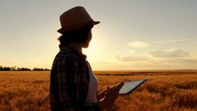 Ung flickabonde i vetefält på solnedgångbakgrund Flickan använder en minnestavla, plan för att skörda rund rörelse av stock video