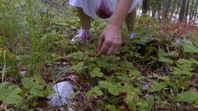 Ung flickahopsamlingar i skogjordgubbarna stock video
