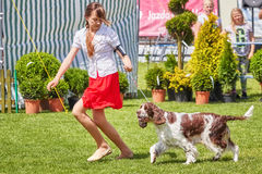 Ung flickakörningar som framlägger en hund Royaltyfri Fotografi