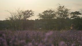 Ung flickaspring i blommafält med netto för att fånga fjärilar stock video