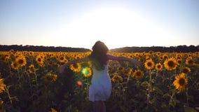 Ung flickaspring längs solrosfält under blå himmel på solnedgången Solsken på bakgrund Följ till kvinnan som joggar på arkivfilmer