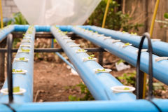 Ung grönsallat i hydrokulturlantgård i Thailand Fotografering för Bildbyråer