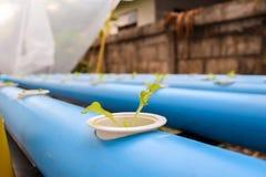 Ung grönsallat i hydrokulturlantgård i Thailand Royaltyfri Fotografi