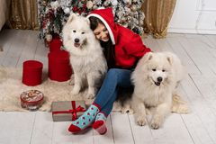 Ung gullig flicka i den santa tröjan som sitter på jordningen nära julgranen och kramar vit hundkapplöpning royaltyfri foto