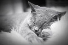 Ung gullig katt som vilar på vit päls Arkivfoto