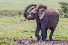 Ung gyttjabadning för afrikansk elefant Arkivbilder