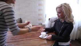 Ung härlig kvinna som dricker kaffe eller ett te i ett kafé arkivfilmer