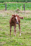 Ung häst Royaltyfria Bilder