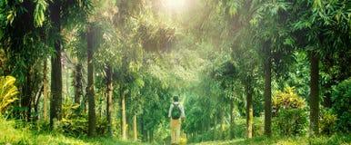 Ung handelsresande som går in i djup skog Arkivfoto