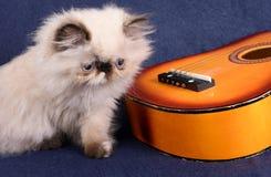 Ung Himalayan persisk kattunge med en gitarr Arkivbilder