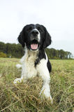Ung hund i den lyckliga hösten för fält Royaltyfri Bild