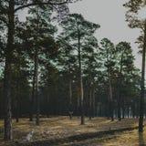 Ung hund i skogen royaltyfria foton