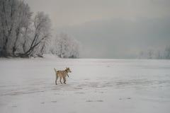 Ung hund i skogen royaltyfri fotografi
