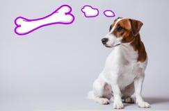 Ung hund som drömmer om benet Arkivfoto
