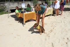 Ung hund som hoppas för ett hem Fotografering för Bildbyråer