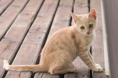 Ung katt Fotografering för Bildbyråer