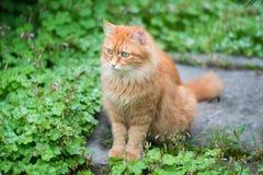 Ung katt i gräset Arkivfoton