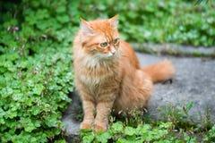 Ung katt i gräset Arkivbild