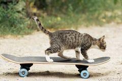 Ung katt på skateboarden Arkivfoto
