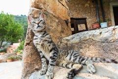 Ung katt på stentrappa hemma Arkivfoto