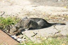 Ung katt som värma sig i solen Arkivfoto