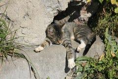 Ung katt som värma sig i solen Royaltyfri Bild