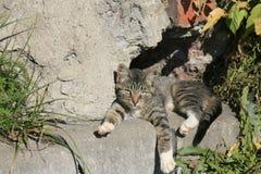 Ung katt som värma sig i solen Arkivbild