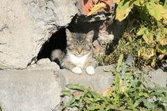 Ung kattsömn i solen Arkivbild