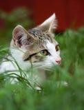 Ung kattunge i ett gräs Arkivbilder