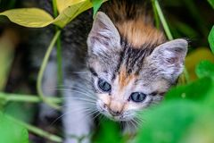 Ung kattunge som döljer i trädgårdbuskar royaltyfri foto