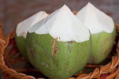 Ung kokosnöt Royaltyfri Foto