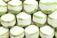 Ung kokosnöt Arkivbild