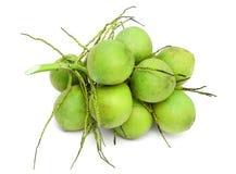 Ung kokosnöt, isolat på vit Royaltyfria Bilder