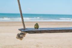 Ung kokosnöt på sjösidagunga med sand arkivfoto