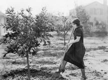 Ung kvinna i en trädgård som gör att arbeta i trädgården (alla visade personer inte är längre uppehälle, och inget gods finns Lev Royaltyfri Foto