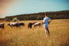 ung kvinna i ett fält som omges av kor Arkivfoton