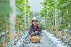 Ung kvinna i ett växthus med plockningen för butternutsquash arkivfoto